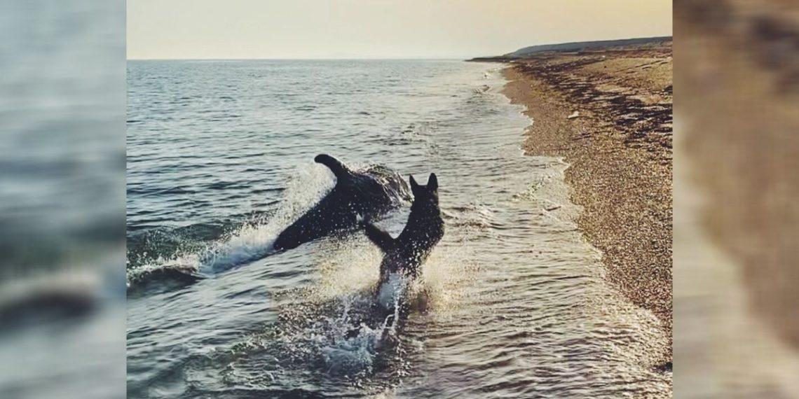 Un perro juega junto a un delfín