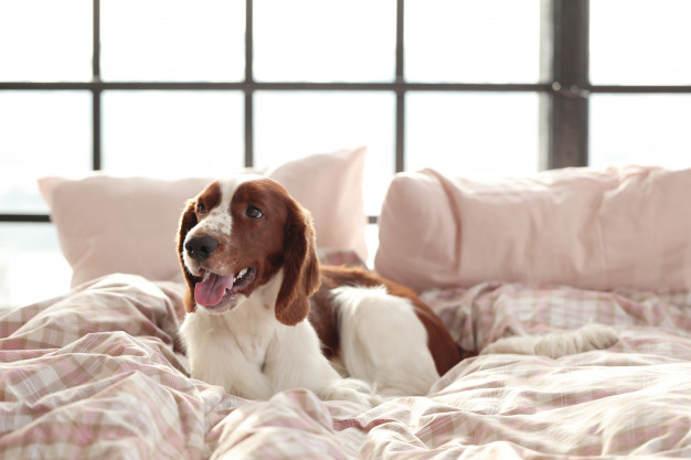cómo eliminar el mal olor y manchas de perros