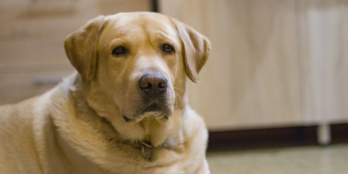 Edad perro