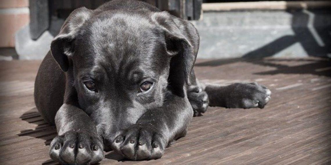 Científicos investigan si los animales pueden predecir los sismos. Foto: Pixabay