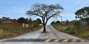 Árbol en Brasil