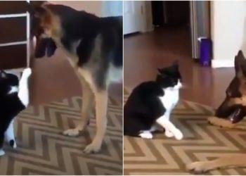 gato y un perro