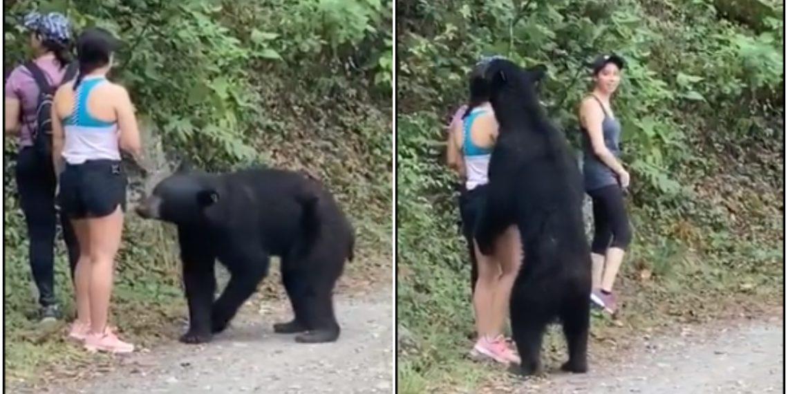 Oso abrazó a mujer
