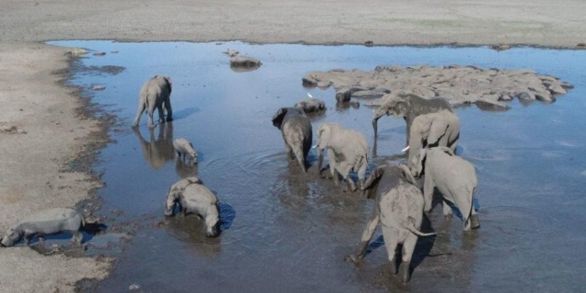 elefantes en Botsuana