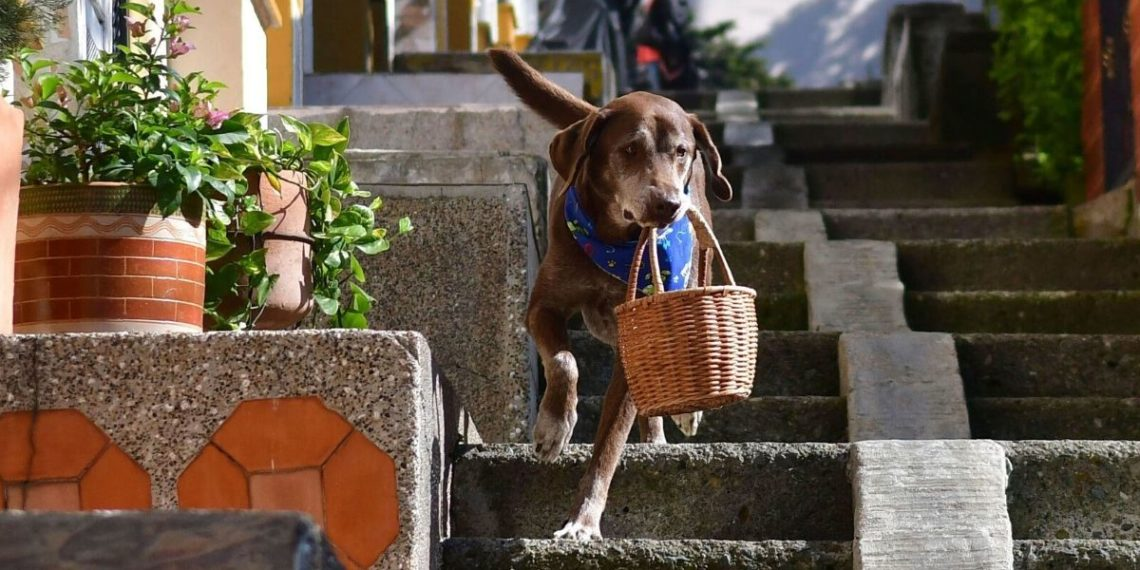 Eros, perro domiciliario
