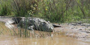 lago cocodrilos