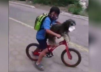 mascarilla a su perro
