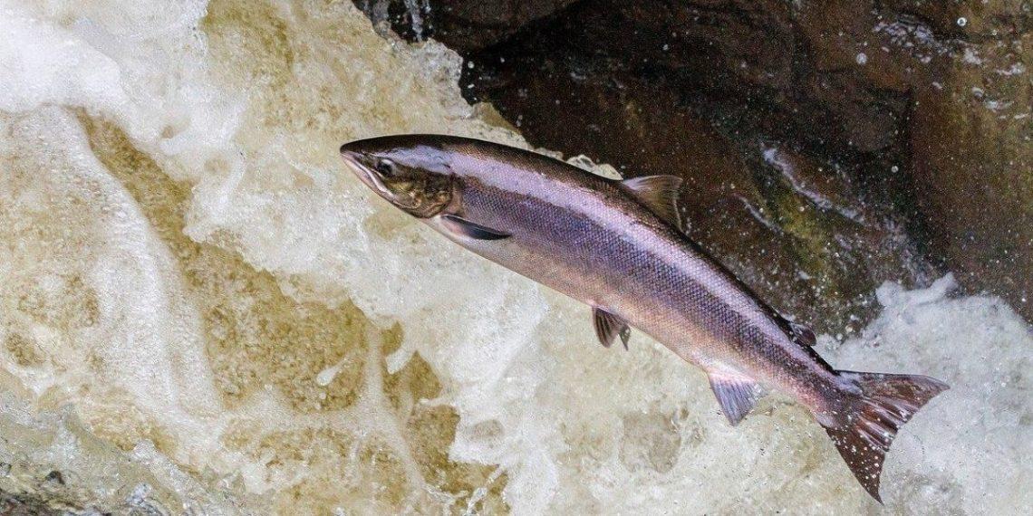 peces migratorios