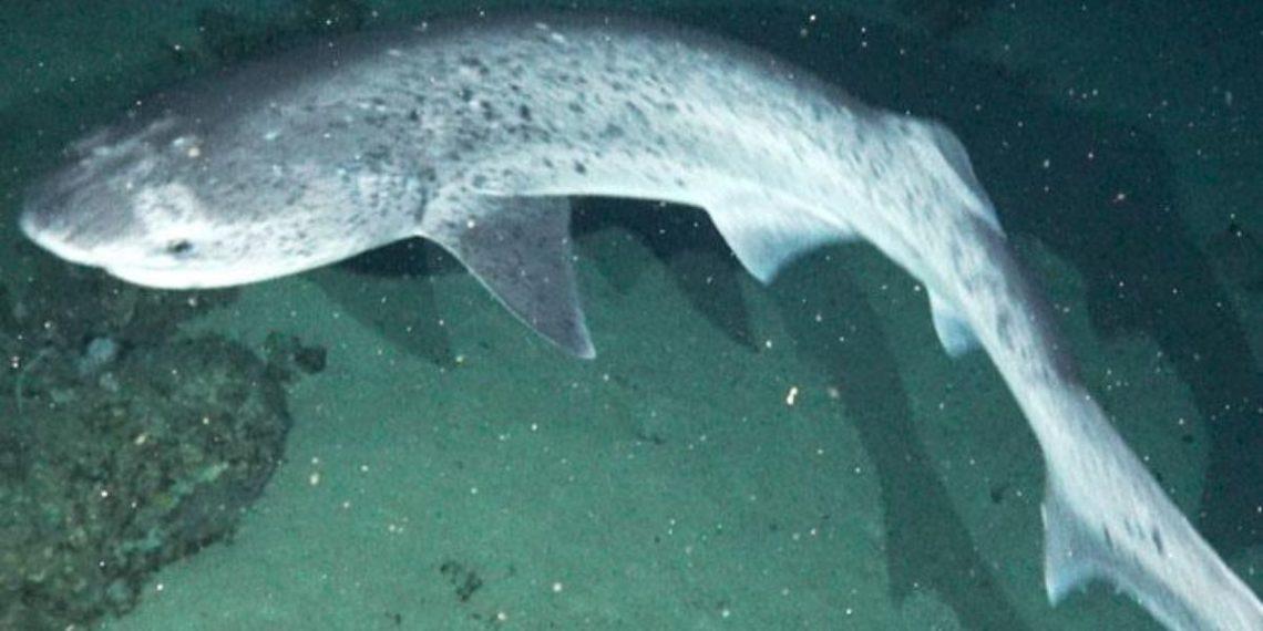 Registran dos especies de tiburones en los Galápagos. Foto: Fundación Charles Darwin/ National Geographic.