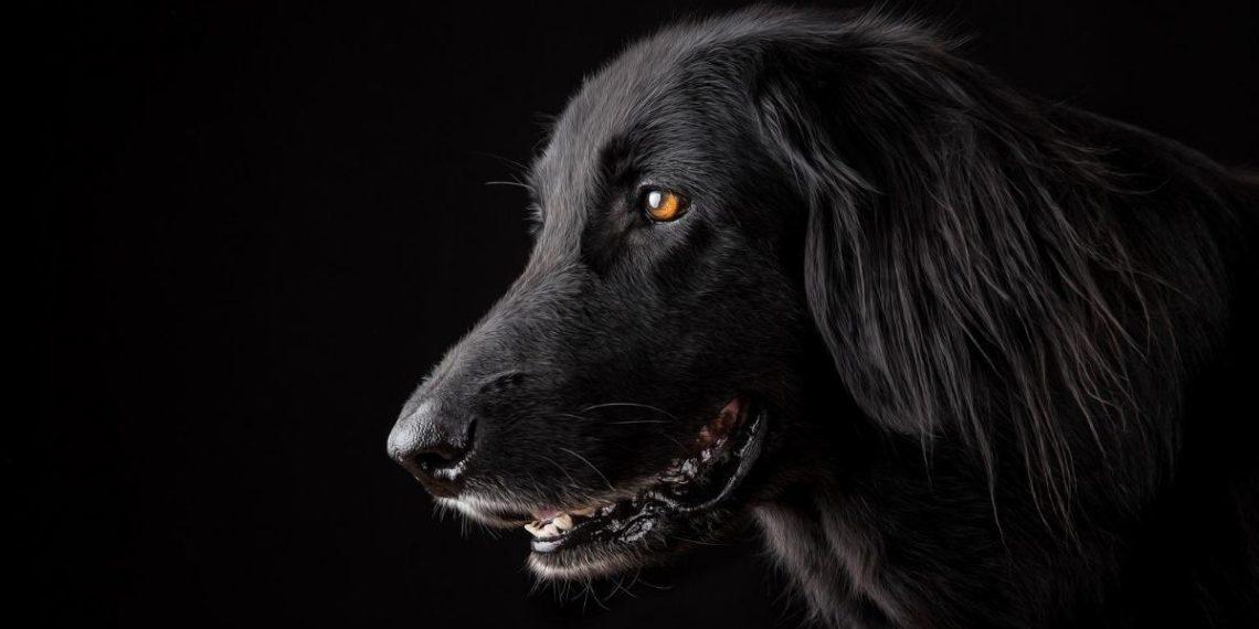perro con deformidad en la cara