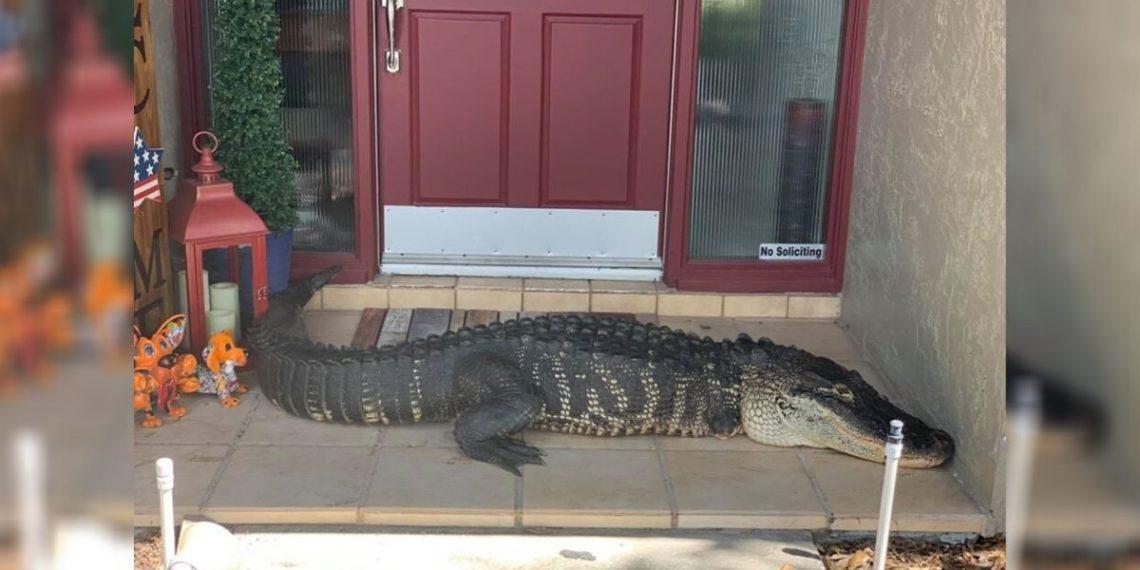 Fotografía del animal. Foto: Facebook/ Croc Encounters