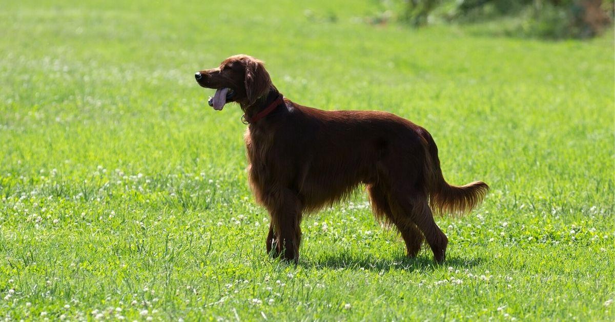 cola perro
