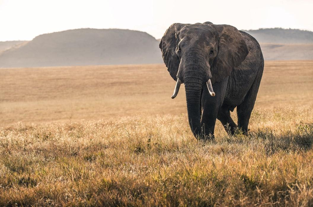 El angustioso rescate de un elefante que cayó dentro de un pozo