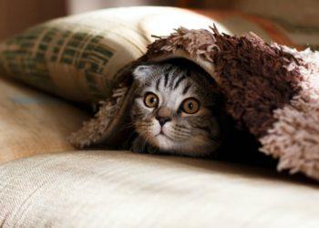 Reto viral de encontrar al gato