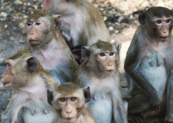 Monkeys animal mammal nature tropical