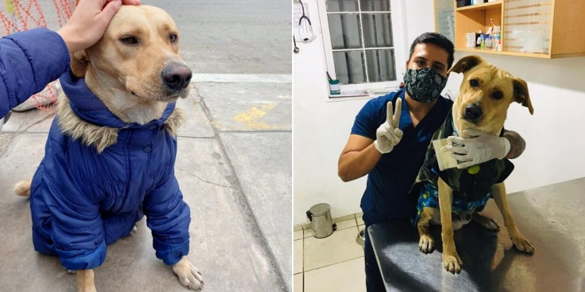 Perro hospital de Perú - firuco