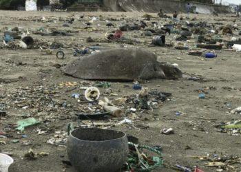 Tortugas plástico