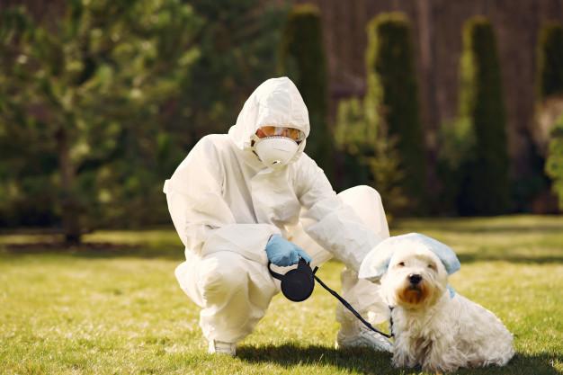 Perros coronavirus