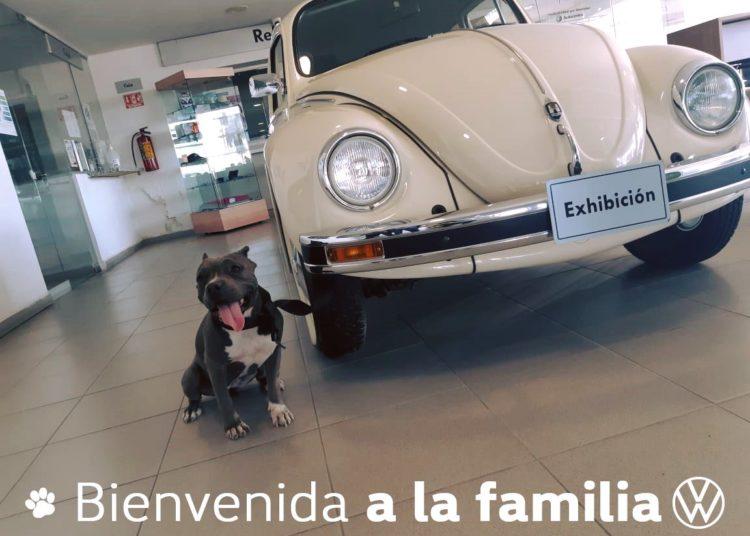 Volkswagen Autocentro Torreón