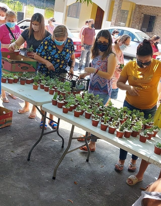 venta de plantas nia con cáncer en México