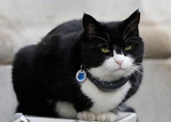 """gato """"diplomático"""""""