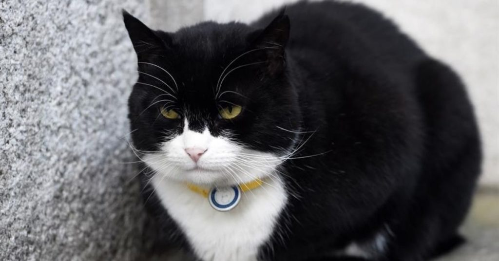 gato diplomático del Reino Unido