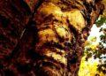 caras en objetos, pareidolia