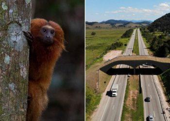 monos en peligro de extinción