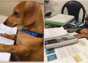Maestra le pidió a sus estudiantes fotos de sus mascotas 'estudiando' y este fue el tierno resultado