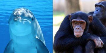 especies de animales vulnerables al coronavirus