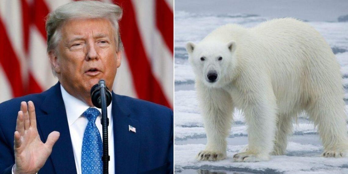 Trump aprueba perforación petrolera en una reserva natural protegida en Alaska. Foto: AP / AFP