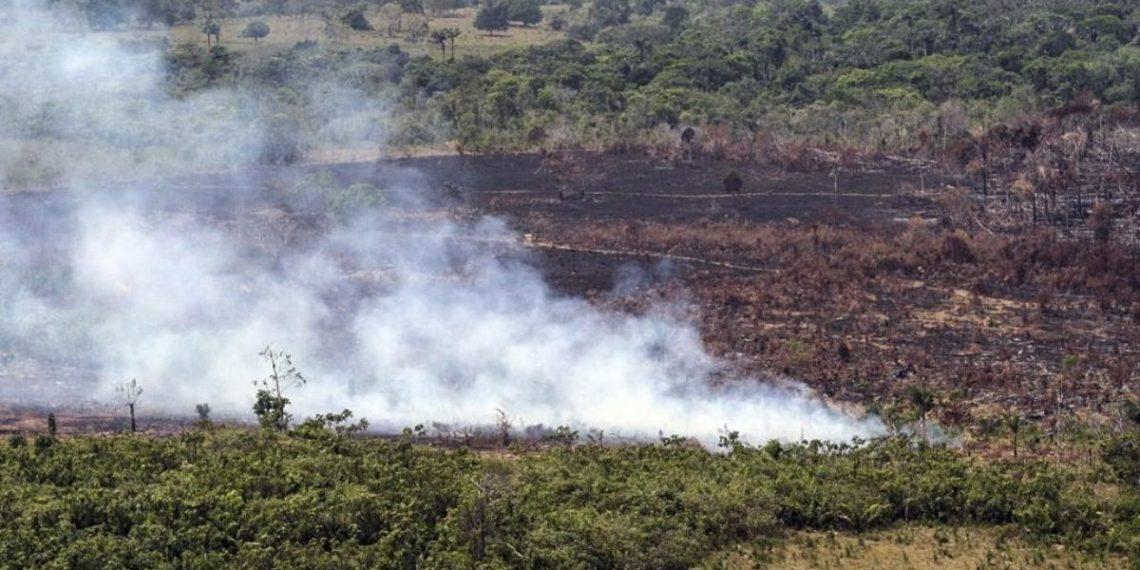 Deforestación Colombia