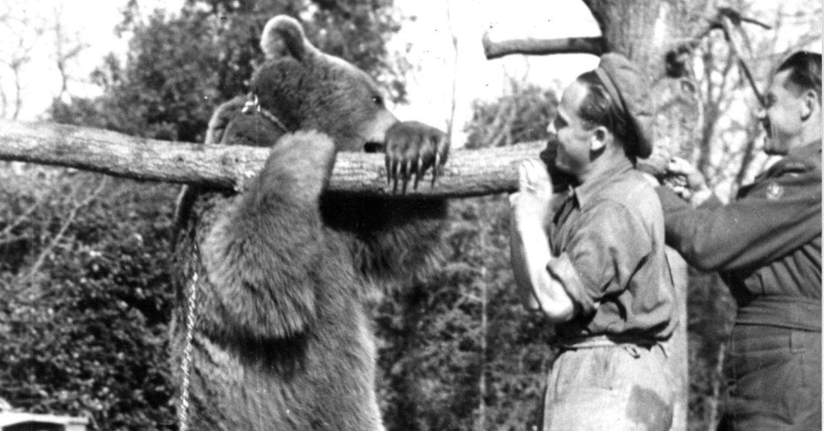 Wojtek', el oso soldado que combatió durante la Segunda Guerra Mundial
