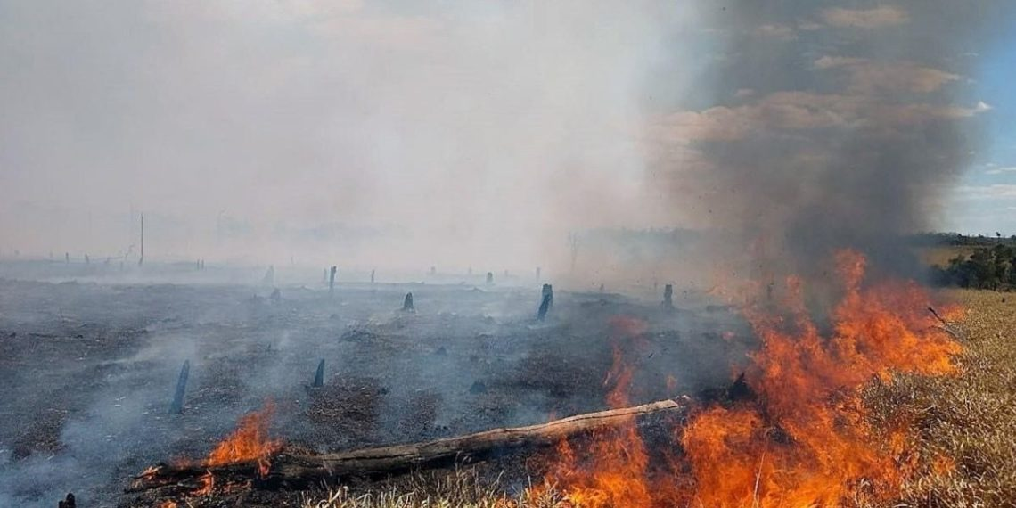Pantanal incendios