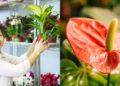Plantas para la 'buena suerte'