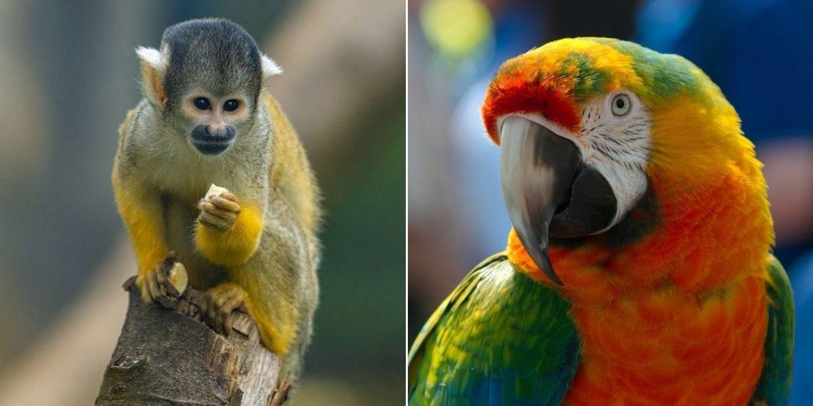 Colombia libera más de 2.600 animales que estaban en cautiverio por el día de la biodiversidad