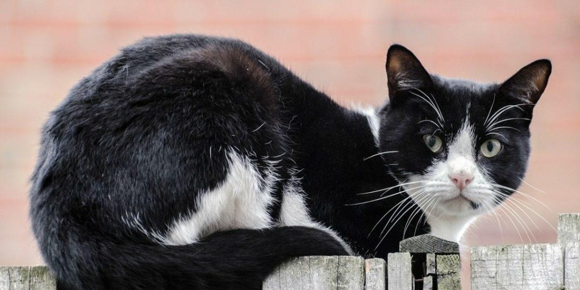 dueños de gatos