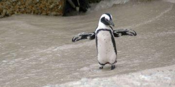 pingüino muerto tras ingerir una mascarillas para el coronavirus
