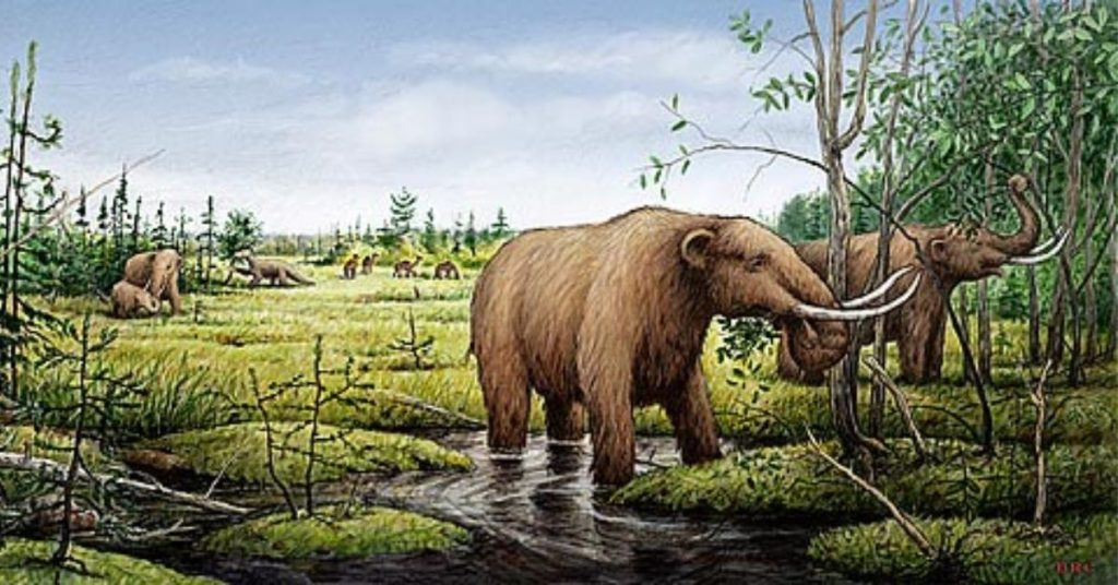 Hallan los restos de un mastodonte en Colombia.