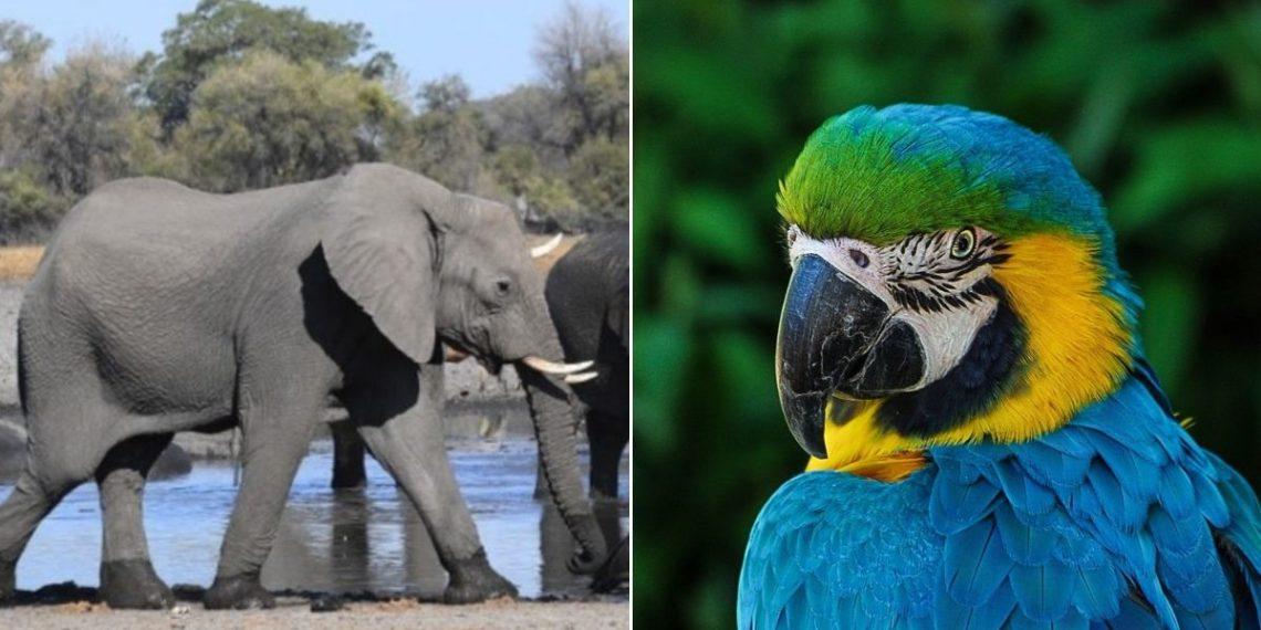 poblaciones de animales y especies en el planeta