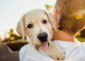 mascotas ayudan a tener una mejor salud mental durante el COVID-19
