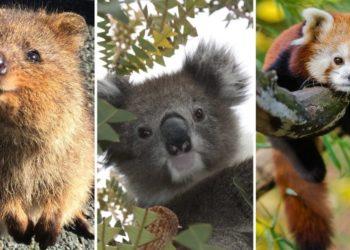 Fotos animales tiernos