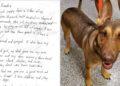 Carta perro
