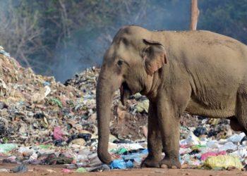 Elefante basura
