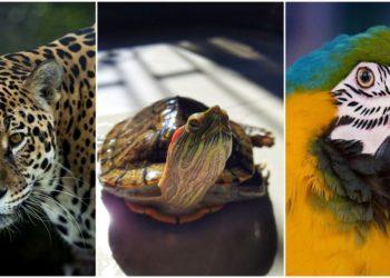 tráfico fauna silvestre