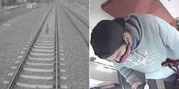 Maquinista frena a tiempo un tren y evita tragedia