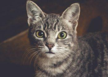 Albergue gatos