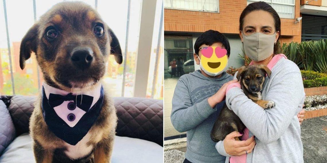 Perro adopción