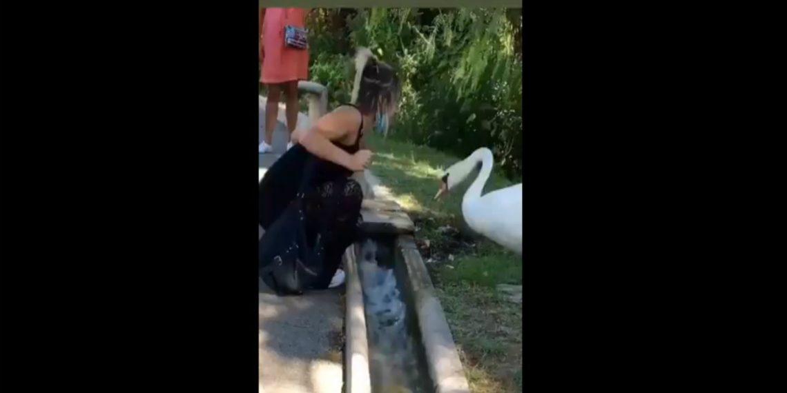 Cisne pone tapabocas correctamente a una turista