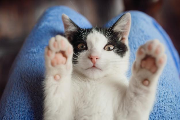 historia del gato